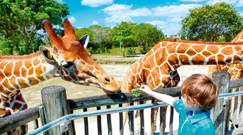 schoolreisje-naar-de-dierentuin